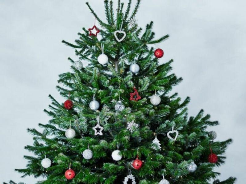 Чем так хороши датские елки