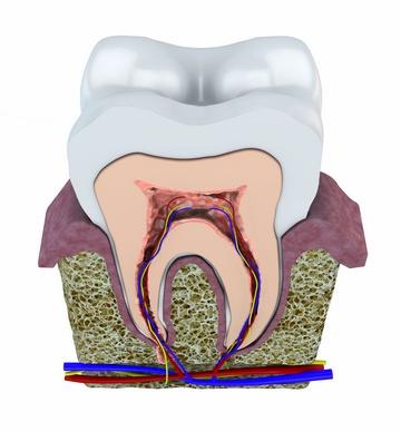Так выглядит альвеола. Фото: Naeblys - Fotolia.com