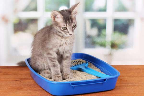 Урологические симптомы у кошек