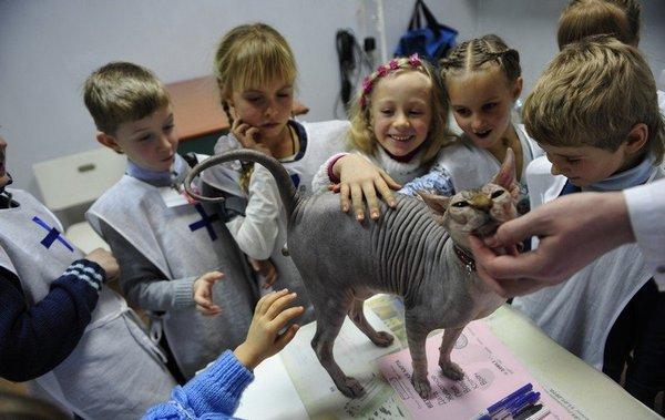 Изучаем животных. Фото с сайта  fontanka.ru