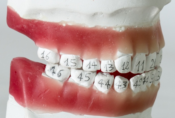 Зубной ряд человека