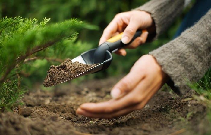почва для хвойных растений