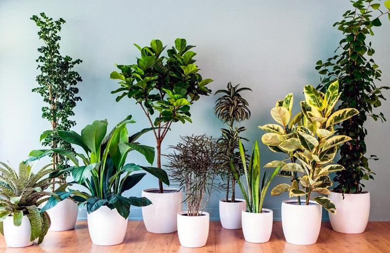 лиственные растения в горшках